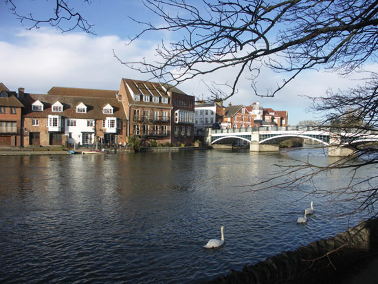 Feeding the swans on the River Thames at Windsor